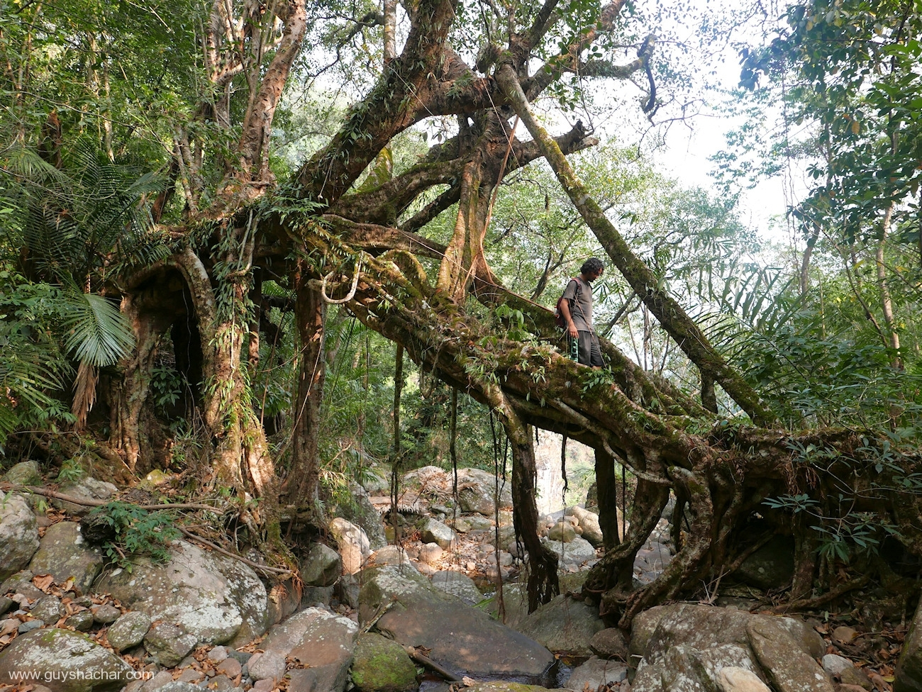 Root Bridges - Kongthong II