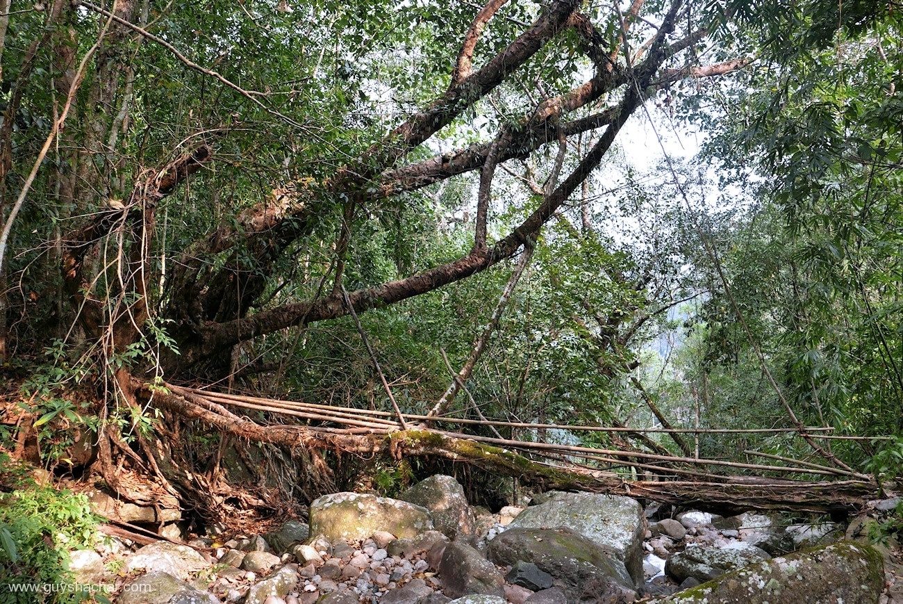 Root Bridges - Kongthong I