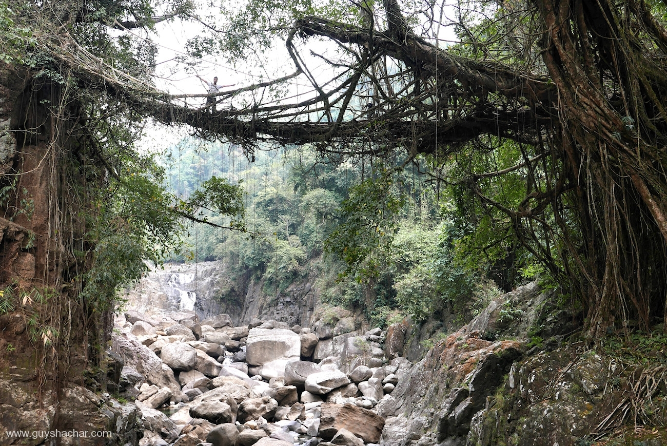 Root Bridges - Kudeng Rim II