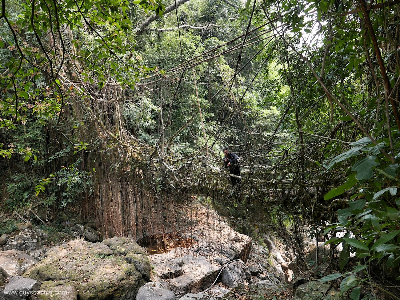 Root Bridges - Kudeng Rim I