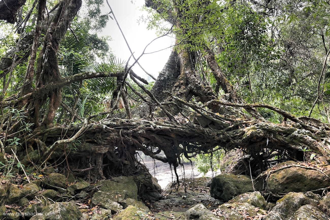 Root Bridges - Mawlynnong Vicinity II