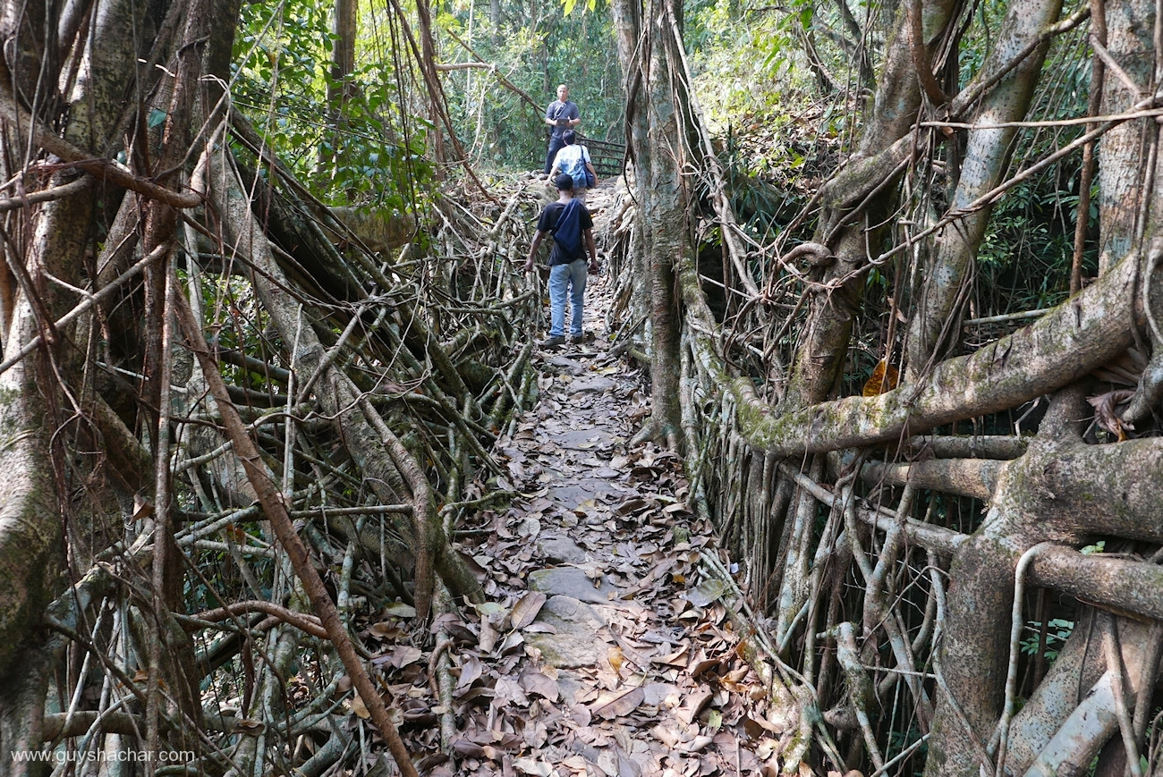 Root Bridges - Mawlynnong Vicinity I