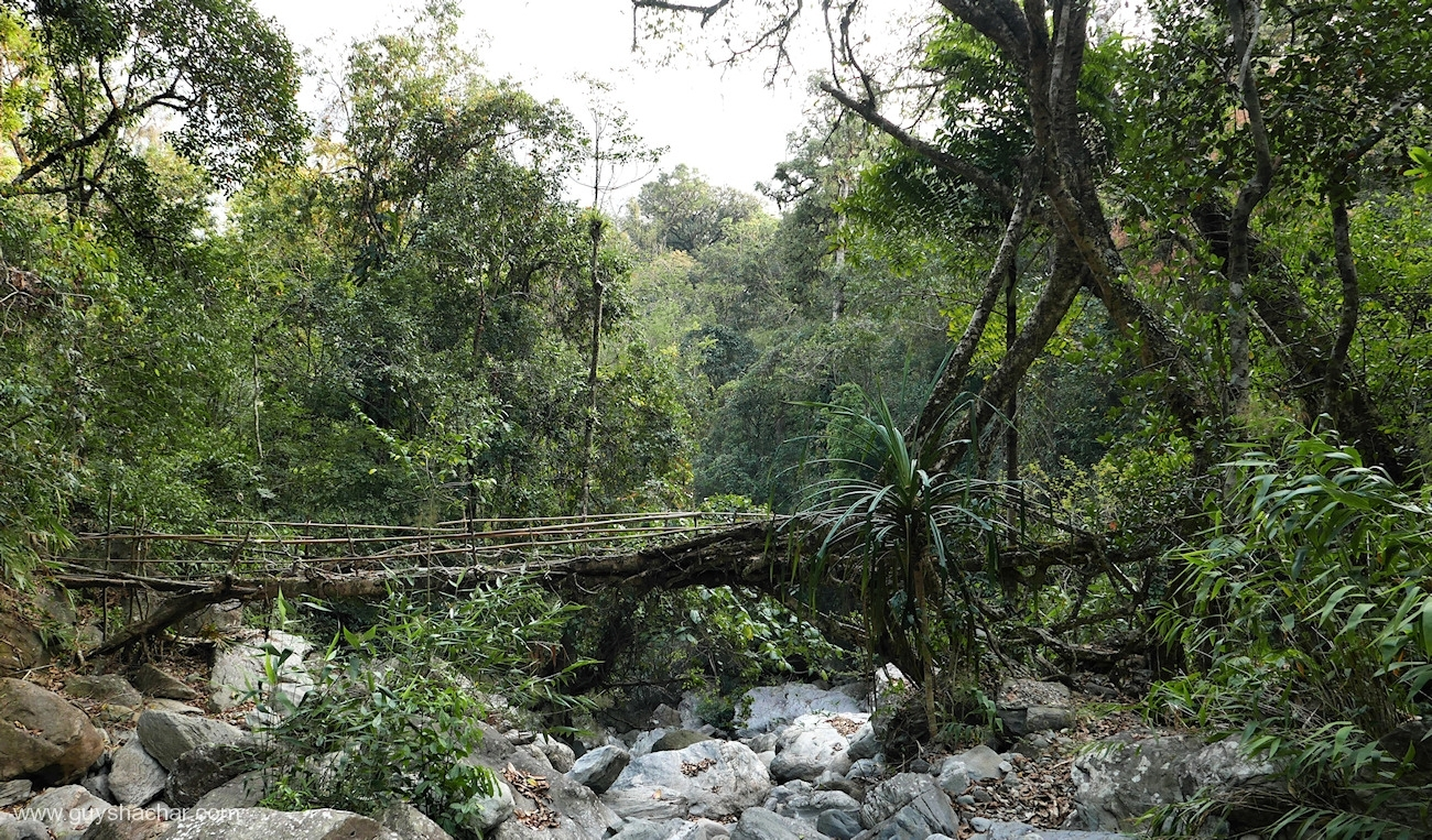 Root Bridges - Myntheng