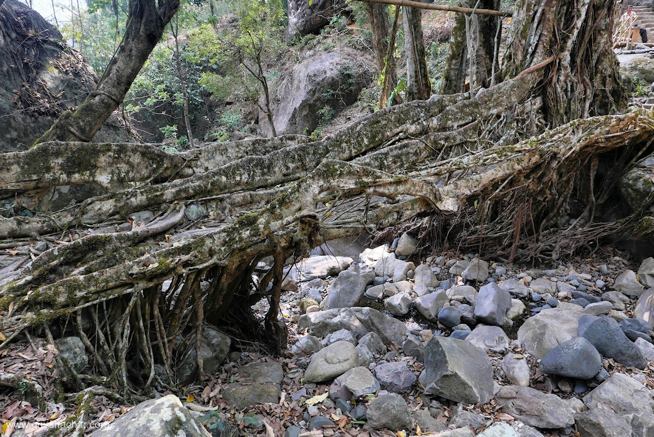 Root Bridges - Nongriat - South