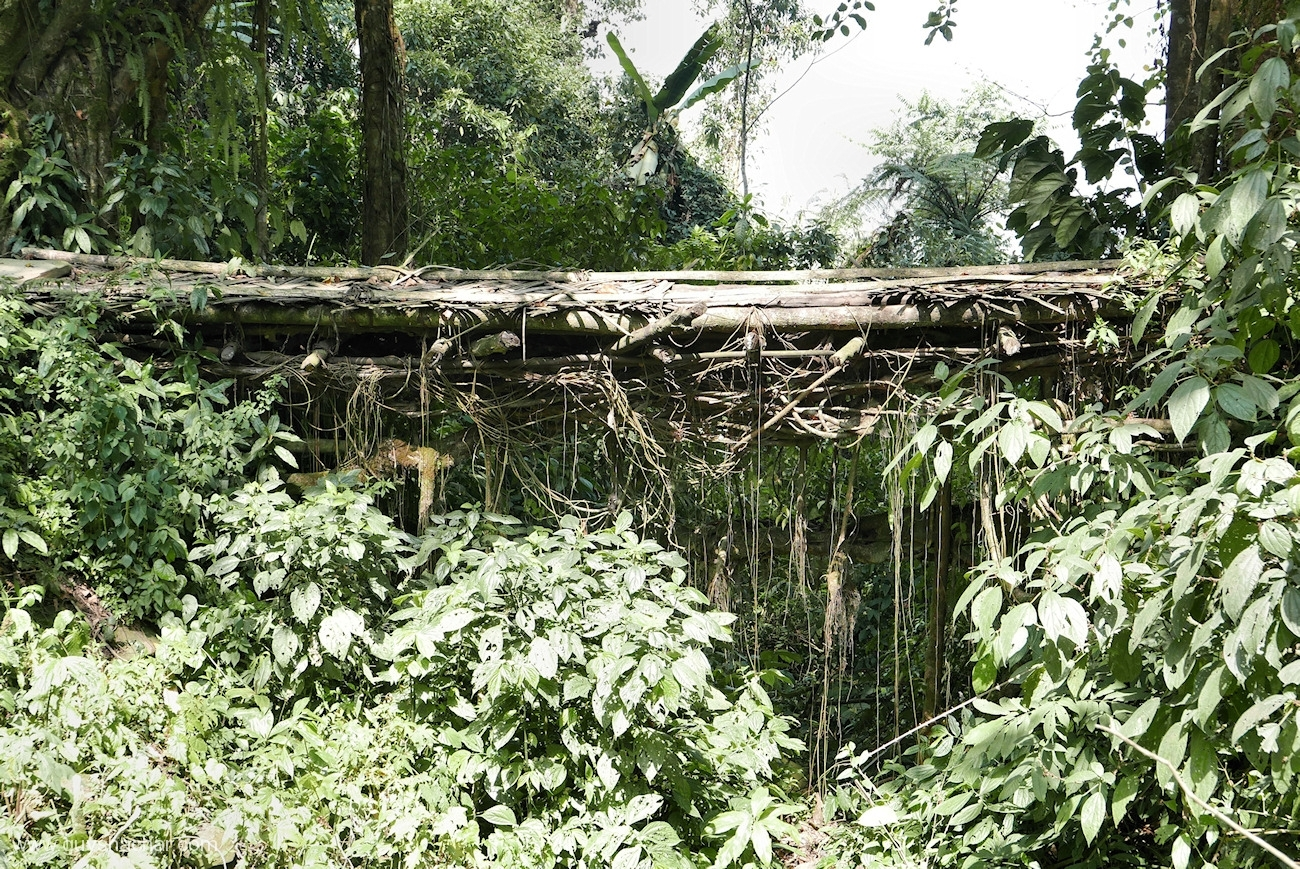 Root Bridges - Nyahnyu I