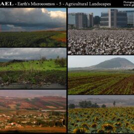 Photo Collages: Israel – Earth's Microcosm